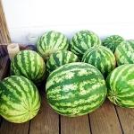 แตงโมคิมสันสวีท - Crimson Sweet Watermelon