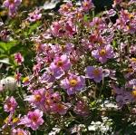 มาจัดสวนสวยด้วยพันธุ์ดอกไม้ฤดูหนาวกัน