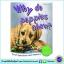 First Questions And Answers - Why do puppies chew? หนังสือคำถามแรกและคำตอบ - ทำไมลูกสุนัขชอบกัด thumbnail 1