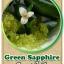 ต้นมะนาวคาเวียร์เสียบยอดสายพันธุ์ Green Sapphire Size M thumbnail 1