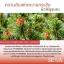 SEWA น้ำโสม เซว่า by วีเจวุ้นเส้น ปลายทางฟรี 1 วันทั่วไทย thumbnail 12