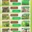 Transform สูตร 2 ธาตุอาหารรอง ธาตุอาหารเสริม thumbnail 4