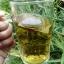 ไผ่จืด ชนิดชงดื่ม (Pai-jued) thumbnail 2