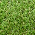 หญ้าเทียม PET-21(1x2เมตร)