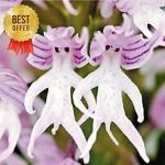 ดอก Italian man orchid / 10 เมล็ด