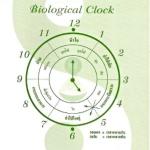 หนังสือ นาฬิกาชีวิต เล่ม 1 ปรับเปลี่ยนพฤติกรรมเพื่อสุขภาพที่ดี เวลา 24 ชั่วโมง เขียนโดย อาจารย์ นวลฉวี ทรรพนันทน์ ว่าด้วยเรื่อง การไหลเวียนของพลังชีวิต (ลมปราณ) BIOLOGICAL CLOCK