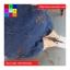 เอี๊ยมแฟชั่น ขาสั้น ผ้ายีนส์ แต่งลายเท้าน้องหมา สียีนส์เข้ม thumbnail 6
