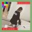 ชุดเซต 2 ชิ้น แขนยาว BLISS OUT +กระโปรง เอวจั๊ม สีดำ thumbnail 6