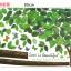 จัมโบ้ ต้นไม้ 2 ขนาด a113 thumbnail 2