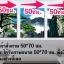 ต้นซากุระสีชมพู arthome26 thumbnail 3