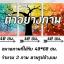 ต้นซากุระสีชมพู arthome26 thumbnail 2