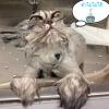 อาบน้ำแมวได้ไหม ปัญหาโลกแตกของทาสแมวทั้งหลาย