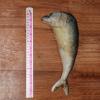ปลาทูแมว ยัดไส้ Catnip 1 ตัว