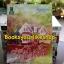 กำแพงรักกำแพงหัวใจ / Rukjun สนพดอกหญ้า หนังสือใหม่ thumbnail 1