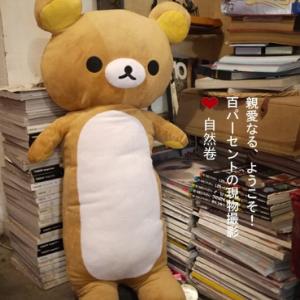 [รุ่นอ้วน] หมอนข้าง ริลัคคุมะ Rilakkuma หมีสีน้ำตาล 80cm