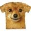 Pomeranian Face - Youth thumbnail 1