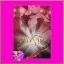 นางร้าย เกตุวดี (ชลาลัย) ปองรัก Pongrak << สินค้าเปิดสั่งจอง (Pre-Order) ขอความร่วมมือ งดสั่งสินค้านี้ร่วมกับรายการอื่น >> หนังสือออก 10 ต.ค. 60 thumbnail 1